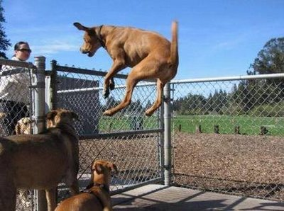 Name:  funny-pictures-of-dogs-Jumping-Dog.jpg
