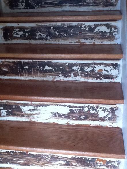 Stair Risers Image 808387701. Ramsden Painting Is Offline