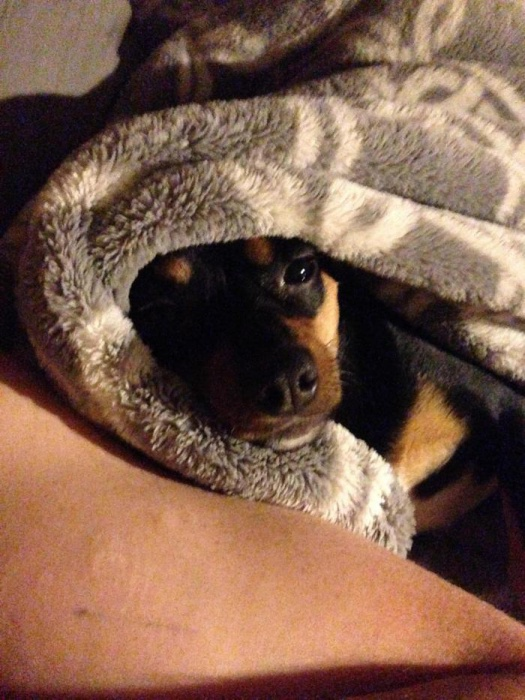Pictures of Your Dog(s)-img_0363_1487255233917.jpg