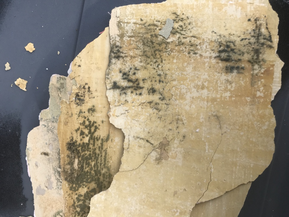 Thick Layer of Paint Peeling off plaster wall, possible mold behind?-paint-2.jpg