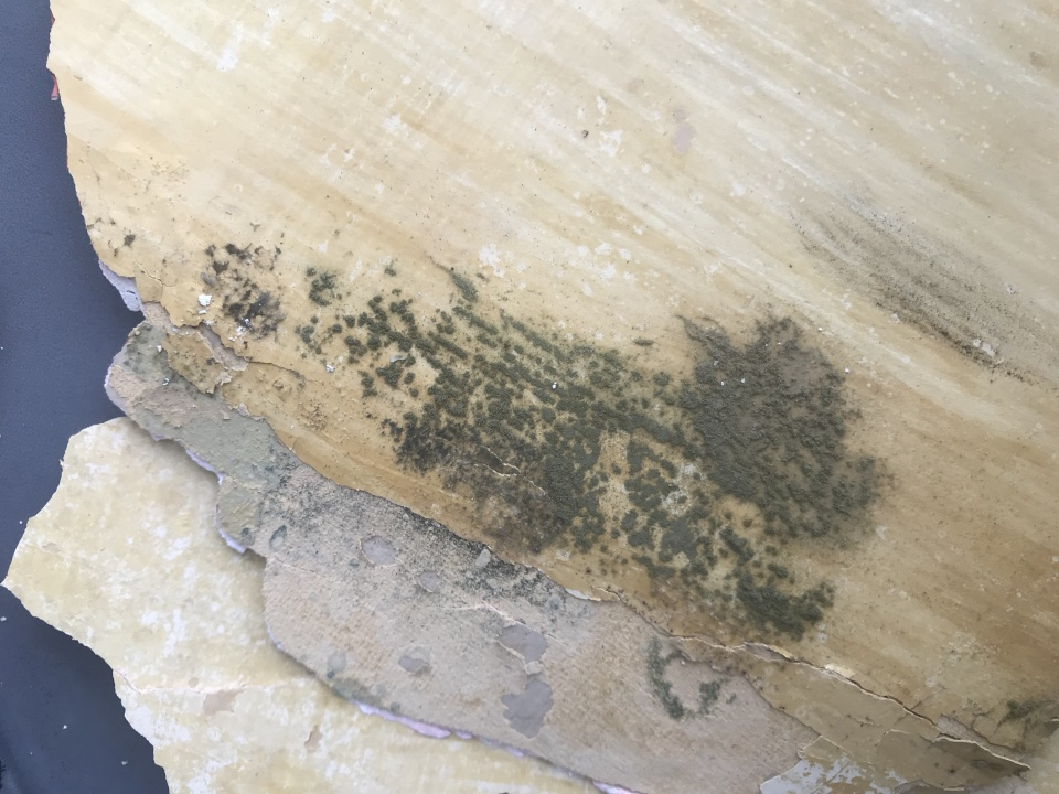 Thick Layer of Paint Peeling off plaster wall, possible mold behind?-paint1.jpg