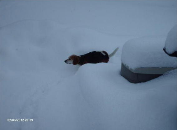 Pictures of Your Dog(s)-snow2-4.jpg