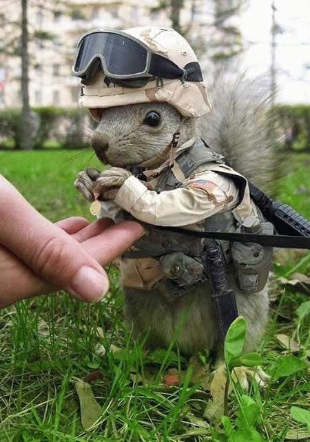Just Post Funny Pics-squirell.jpg